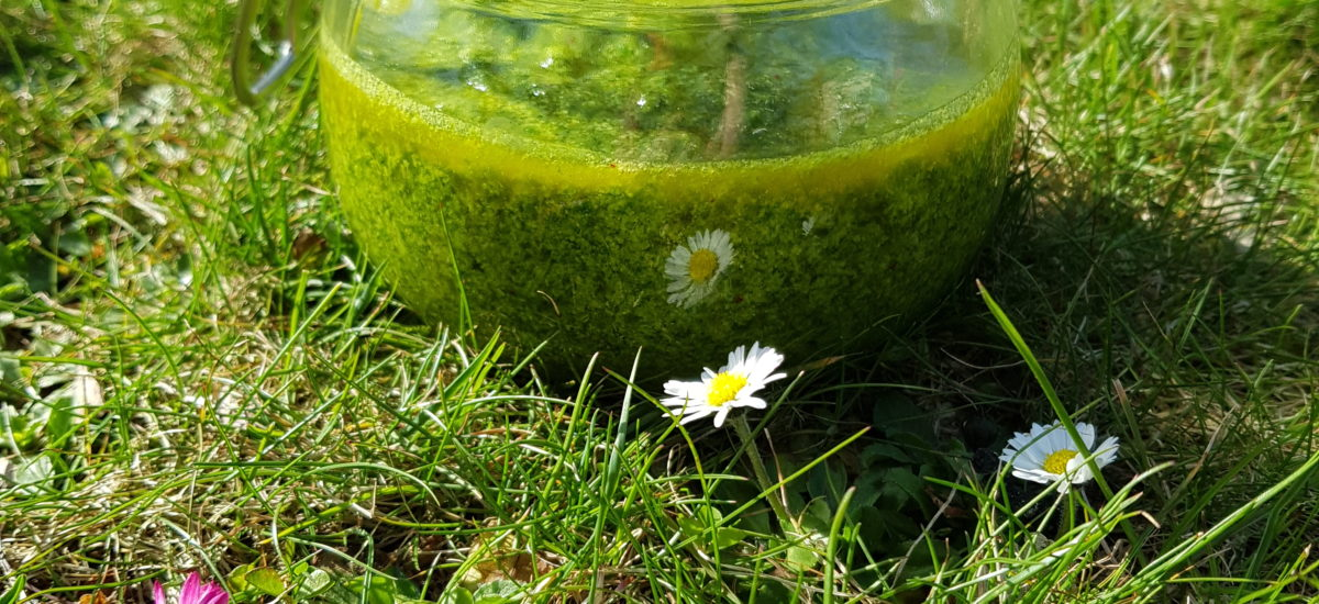 Bärlauch – Basilikum Pesto – Thermomixrezept